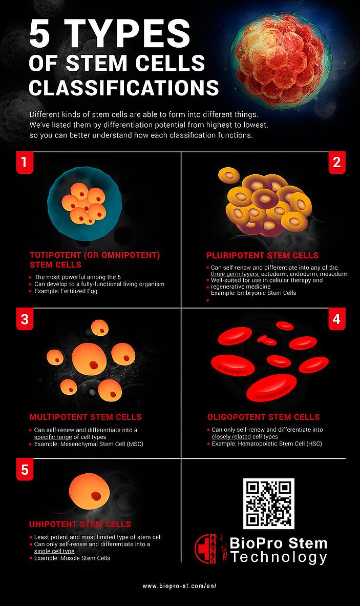 5 types of stem cells